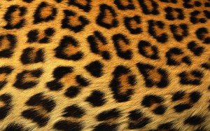 leopard_print_background-1440x900